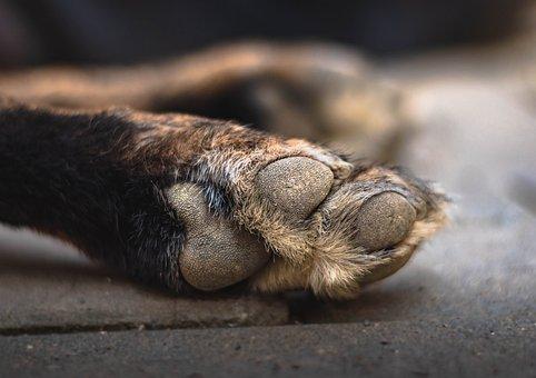 Dog, Paw, Foot, Animal, Small