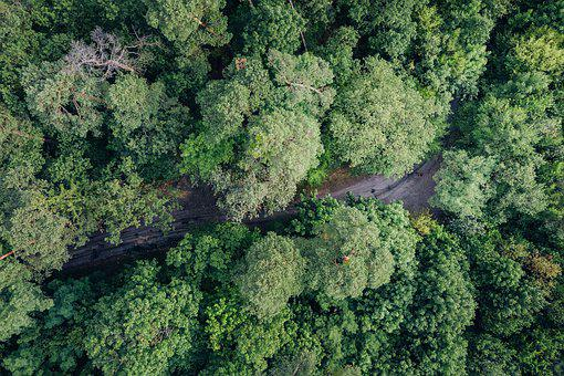 Tree, With Drone, In Advance, View From Above, Forest