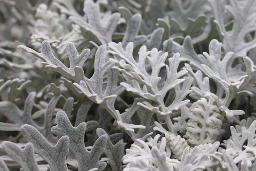 Frost, Flower Frost, Plant, Bloom, Icy, Blossom