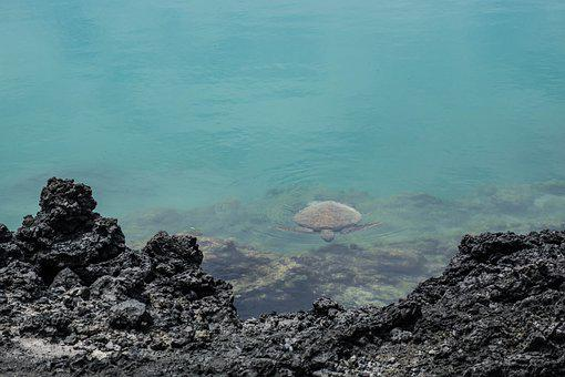 Seaturtle, Turtle, Galapagos, Tortoise, Water, Turtles