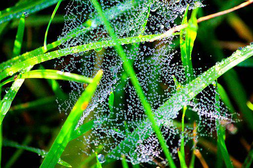 Drops, Water, Dew, Grass, Nature, Beads, Drop, Droplets