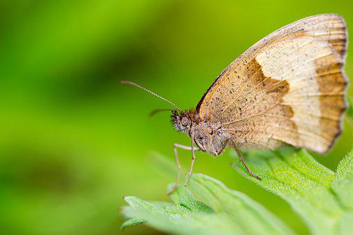 Butterfly, Leaf, Brown, Green, Compound Eyes, Nature