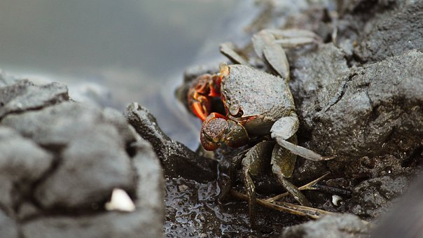 Kerala, India, Crab, Red, Orange, Shell, Nature, Kochi