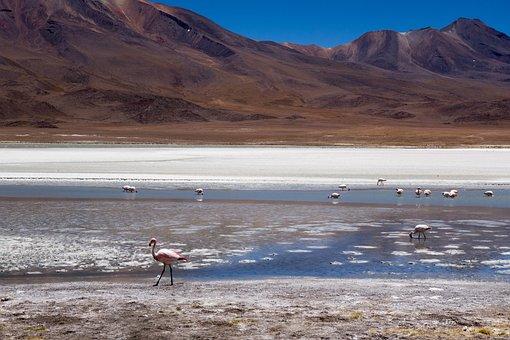 Bolivia, Salt, Landscape, Altiplano, Arid, Dry, Heat