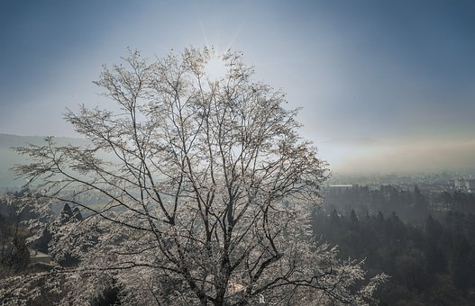 Winter, Tree, Ice, Snow, Nature, Cold, Landscape, Trees