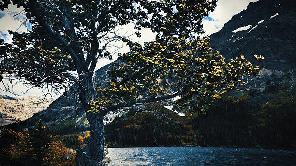 Trees, Lake, Water, Mountains, Nature, Landscape