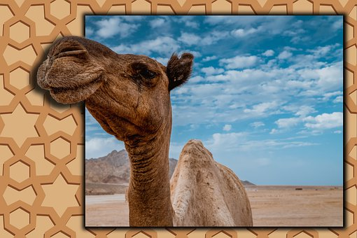 Camel, Arab, Ornament, Desert, Nature, Egypt, Landscape