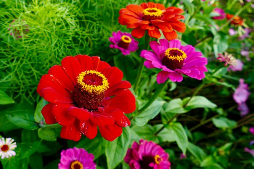 Flower, Red, Yellow, Particularly, Flowers, Nature