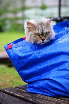 Cat, Pet, Animal, Cute, Little, Lovely, Hair, Cart