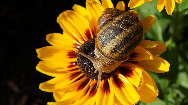 Snail, Coneflower, Background, Pattern, Garden, Nature