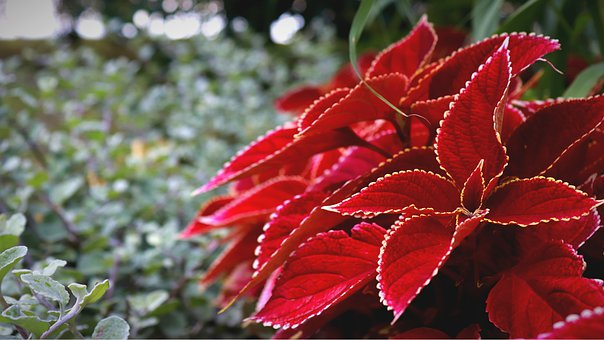 Red Flowers, Barbed Plant, Thorn Flower, Stone Garden