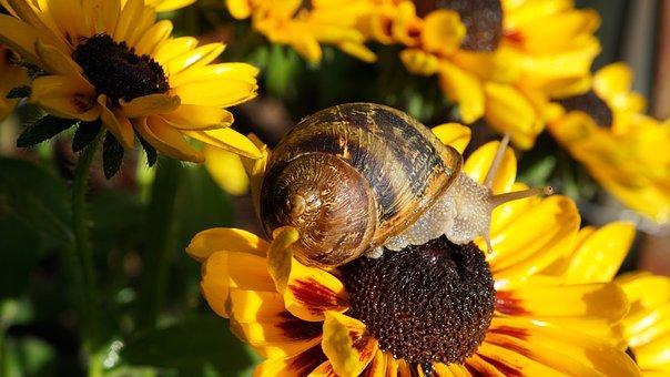 Coneflower, Snail, Summer, Bloom, Animal World, Crawl