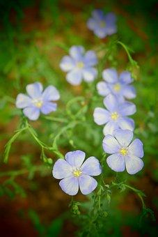 цветы, Color, Summer, Spring, Foto, Flower, зеленый