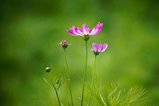 Nature, Summer, Ladybug, Wild, Plant, Flowers