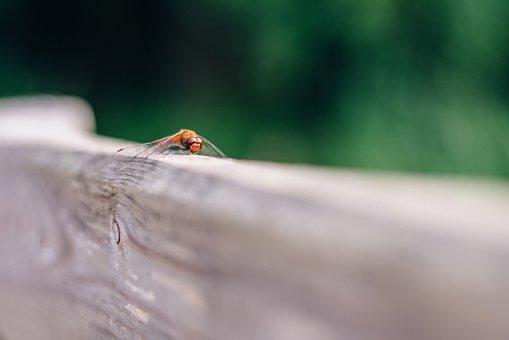 Ważka, Bokeh, Blur, The Background, Nature, Insect