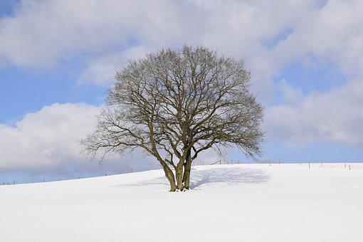 Winter Wonderland, Eifel, Snow, Winter, Wintry, Tree