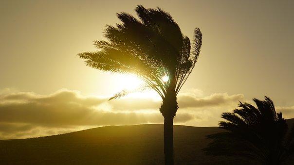 Palm Trees, Sunset, Background, Pattern, Abendstimmung