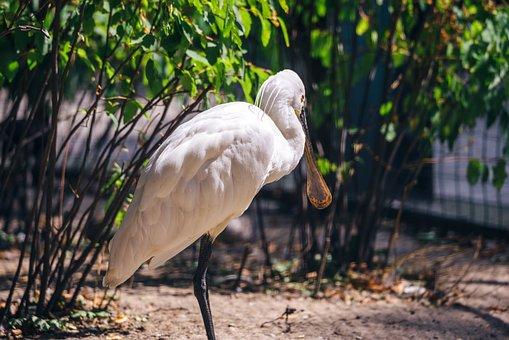 White Bird, Zoo, Cage, Dzungla, Bird, Eye, Figure