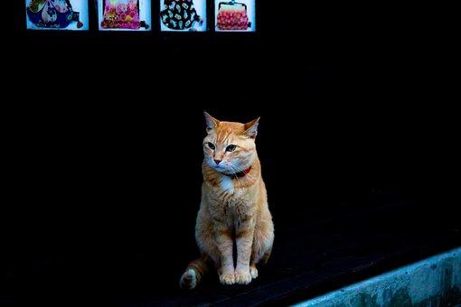Cat, Kitty, Black, Orange, Kitten, Pet, Feline, Animal