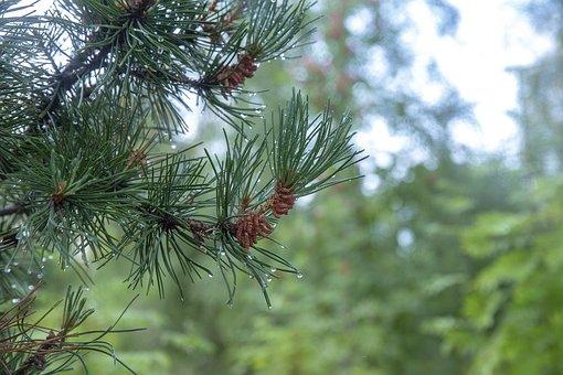 Forest, Rain, Beauty, Nature, Freshness, Mood, Color
