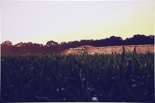 Water, Cornfield, Irrigation, Countryside, Farm, Field