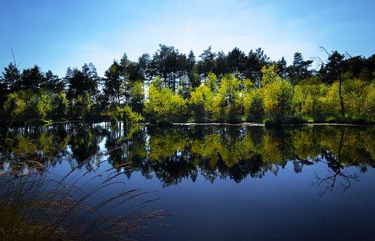 Pietz Moor, Deciduous Trees, Pond, Moor, Mirroring