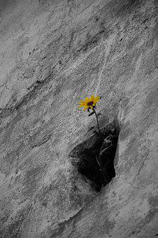 Flower, Wall, Plant, Detailed, Color, Outdoors