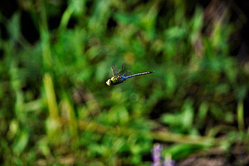 Dragonfly, Stopped, Motionless, In Flight, Flying