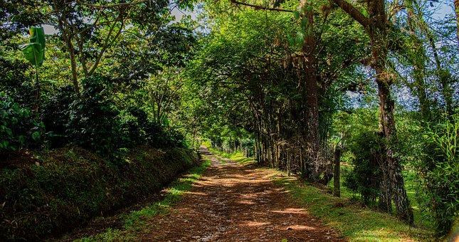 Green, Nature, Peace, Life, Landscape, Forest, Sea