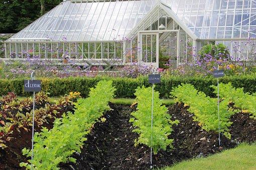 Greenhouse, Gardening, Plant, Growth