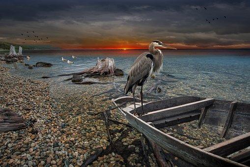 Sunset, Ocean, Boat, Landscape, Lake, Clouds, Seagull