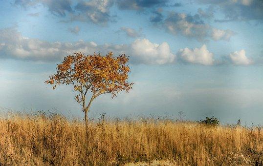 Landscape, Drought, Tree, Fields, Straw, Cloudy