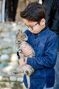 Cute, Pet, Cat, Boy, Standing, Looking, Love, Domestic