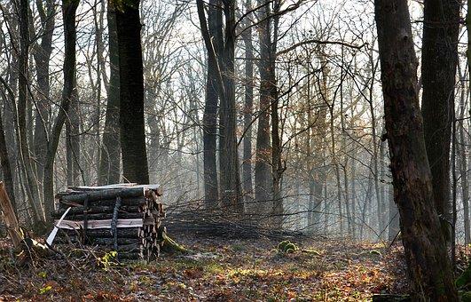 Forest, Wood, Nature, Lumberjack, Work, Trees