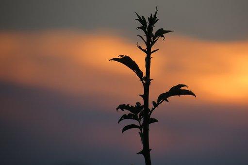 Plant, Sun, Lying, Nature, Garden, Environment, Summer
