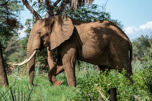 Elephant, Africa, Safari, Animals, Nature, Wilderness