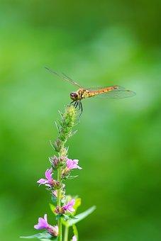 Wildflower, Butterfly, Mountin, Flower, Wild, Nature
