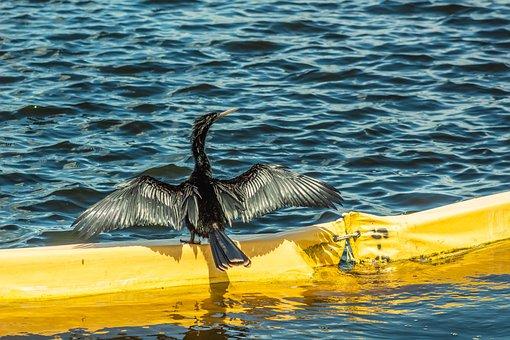 Bird, Water Bird, Florida Bird, Nature, Wildlife