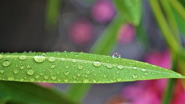 Background, Pattern, Drop Of Water, Wet, Moist