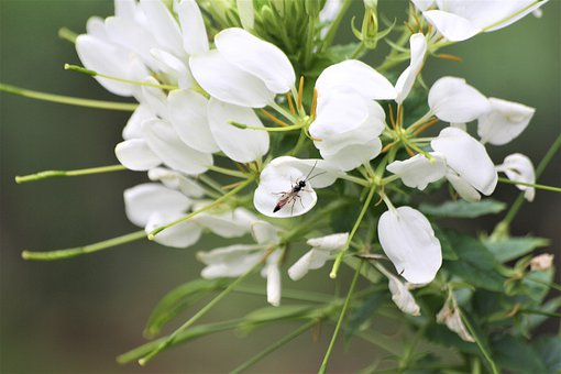 Petals, White, Fly, Walk In The Park, Insect, Hh