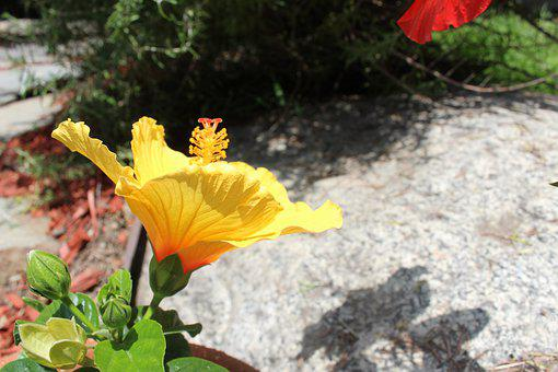 Flower, Yellow, Plant, Nature, Outdoor, Flora, Blooming