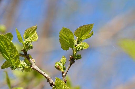 Tree, Spring, Nature, Branch, Garden, Flower, Plant