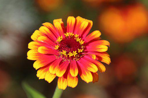 Flower, Plants, Yellow, Red, Color, Summer, Nature