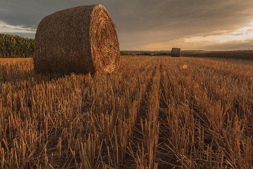 Golden Hour, Straw Bales, Cereals, Agriculture, Field