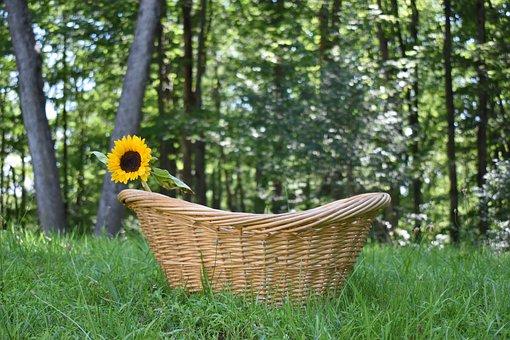 Sunflower, Nature, Summer, Plant, Petals, Garden