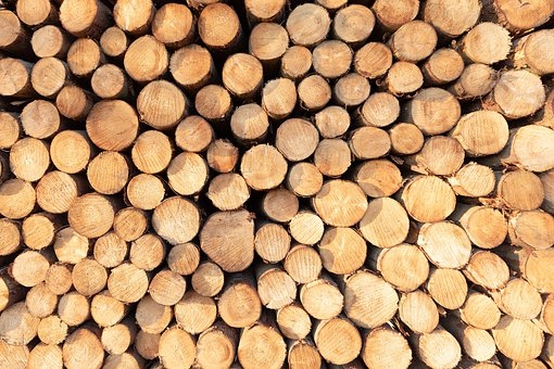 Wood, Tree, Log, Forest, Forest Floor, Green, Tribe