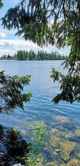 Lake, Summer, Tree, Peace Of Mind, The Silence