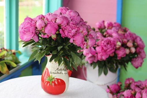 Peonies, Pink, Flowers, Vase