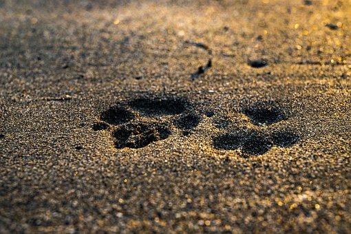 Beach, Sunset, Dog, Cat, Sea, Ocean, Sunrise, Water