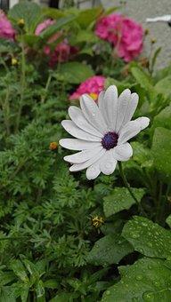 Plant, Flowers, Blossom, Bloom, Raindrop, Wet, Green